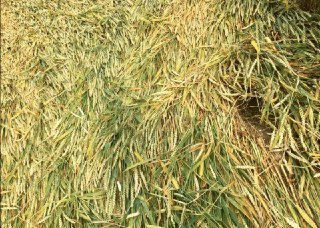 Crop Circle di Büren